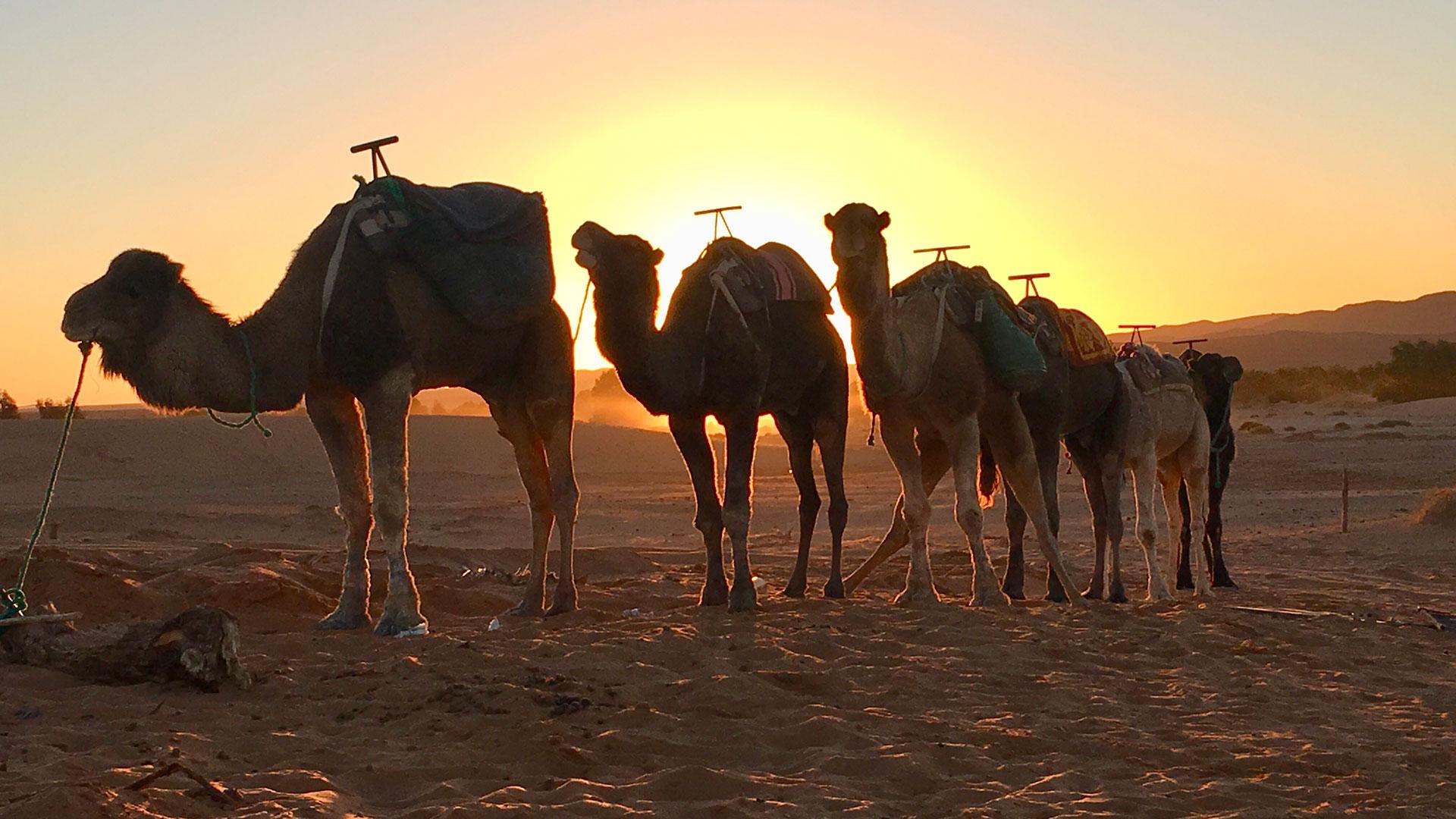 Turismo no Marrocos, que tal?